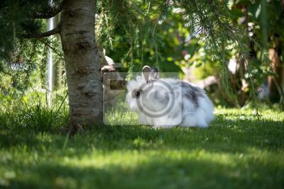 Fototapete Angora Kaninchen Im Garten