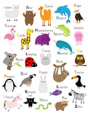 Animal zoo abc alphabet. Cute cartoon set. Baby children education. Alpaca llama bear camel dolphin eagle flamingo giraffe hippopotamus iguana koala sloth unicorn owl penguin bunny. Flat design