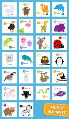 Animal zoo abc alphabet. Cute cartoon set. Baby children education. Alpaca llama bear dolphin camel eagle flamingo giraffe iguana hippopotamus koala sloth unicorn owl penguin bunny. Flat design