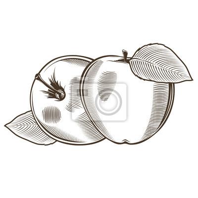 Äpfel im Weinleseart. Linie Kunst Vektor-Illustration