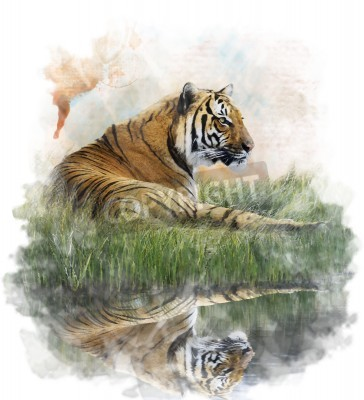 Fototapete Aquarell Digitale Malerei Des Tigers Auf Rasen Bank Mit Reflektion