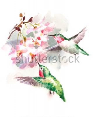 Fototapete Aquarell-Vogel-Kolibris, die um die Kirschblüten-Blumen Hand gezeichnete Sommer-Garten-Illustration lokalisiert auf weißem Hintergrund fliegen