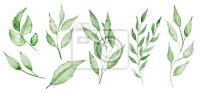 Fototapete Aquarellgrünblätter und -brunchs Grünkrauthand rawn Illustration