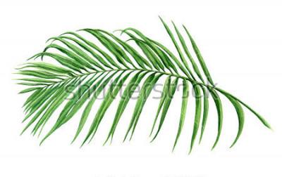 Fototapete Aquarellmalereikokosnuss, Palmblatt, grüne Blätter lokalisiert auf weißem Hintergrund Handgemachtes exotisches Blatt der Aquarellmalerei der Illustration für Tapetenweinlese Hawaii-Artmuster Mit Besch