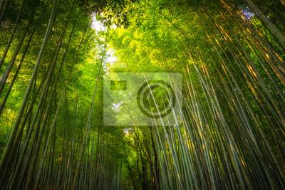 Arashiyama Bambushain Fototapete Fototapeten Bambuswald