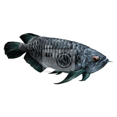 Aruana fisch schwimmt seitwärts skizze vektor grafik farbbild ...