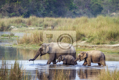 Asiatischer Elefant im Nationalpark Bardia, Nepal