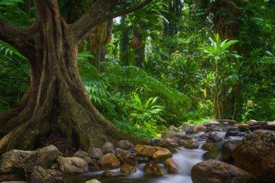 Fototapete tropischer regenwald  Asiatischer tropischer regenwald fototapete • fototapeten Dschungel ...