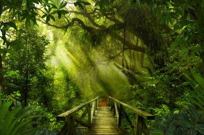 Fototapete tropischer regenwald  Asiatischer tropischer regenwald fototapete • fototapeten Holz ...