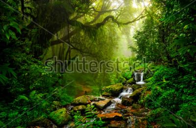 Fototapete Asiatischer tropischer Regenwald