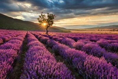 Fototapete Atemberaubende Landschaft mit Lavendelfeld bei Sonnenaufgang