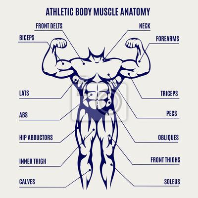 Athletic körper muskel anatomie kugelschreiber farben poster ...