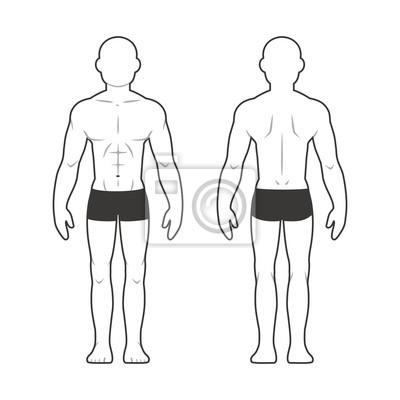 Athletische männliche körper diagramm fototapete • fototapeten ...