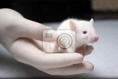 Baby Albino Ratte in der Hand mit einem Handschuh gehalten durch Forscher