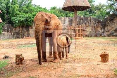 Baby-Elefanten stehen neben seiner Mutter.