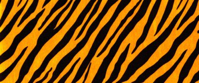 Fototapete Background with a pattern of tiger stripes, tiger color. Tiger skin background or texture.