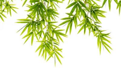 Fototapete Bambus-Blätter isoliert auf weißem Hintergrund