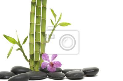 Bambus Hain Und Zweig Orchidee Auf Kies Fototapete Fototapeten