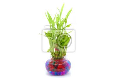 Bambus Pflanze Auf Einem Weissen Hintergrund Fototapete Fototapeten