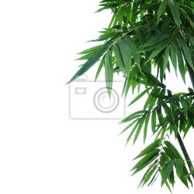 Bambus Pflanze Grune Blatter Auf Weissem Hintergrund Selektiven