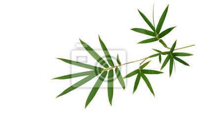 Bambus Pflanze Grune Blatter Isoliert Auf Weissem Hintergrund