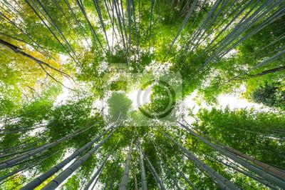 Bambushain Bambus Wald In Arashiyama Kyoto Japan Fototapete
