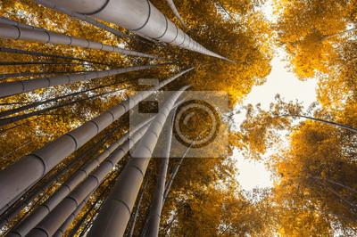 Bambushain Bambus Wald In Arashiyama Kyoto Japan Im Herbst