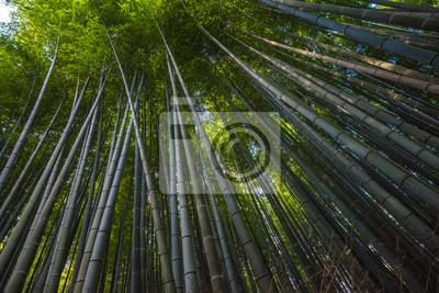 Bambushain In Arashiyama Kyoto Japan Fototapete Fototapeten