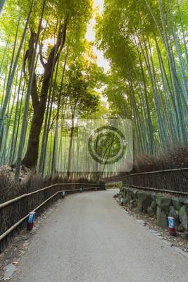 Bambushain Mit Spaziergang In Kyoto Japan Fototapete Fototapeten