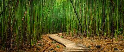 Bambuswald Fototapete Fototapeten Bambuswald Umweltschutz