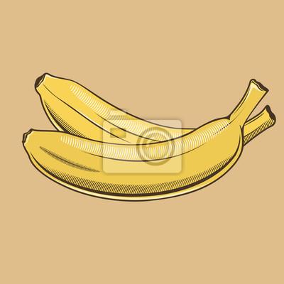 Bananen im Vintage-Stil. Farbigen Vektor-Illustration