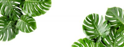 Fototapete Banner of green tropical palm leaves Monstera on white background. Flat lay, top view.