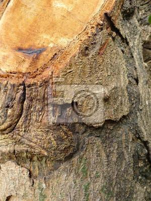 Baum-Beschaffenheit