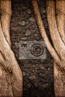 Baum Und Boden Texturen Fototapete Fototapeten Scholle Holprig
