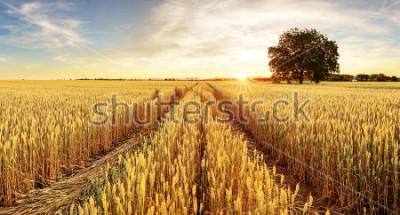 Fototapete Baum und Weizenfeld