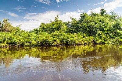 Fototapete Bäume Futter Fluss Yacuma in Bolivien