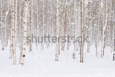 Fototapete Bäume im Park oder im Wald im Winterschnee
