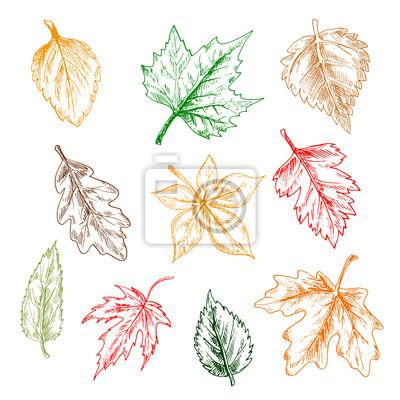 Bäume und Pflanzen verlässt Bleistiftskizze