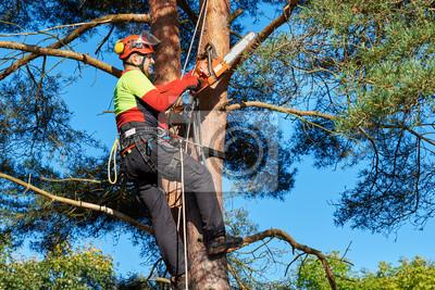 Klettergurt Für Baumklettern : Baumkletterer mit säge und klettergurt holzfäller bei der arbeit