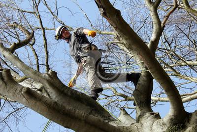 Klettergurt Für Baumpflege : Baumpfleger im klettergurtzeug fototapete u2022 fototapeten schwindel
