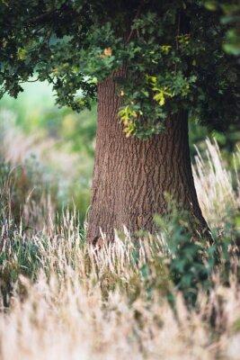 Fototapete Baumstamm zwischen hohem gelbem Gras.