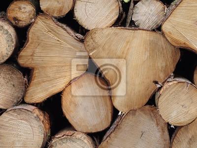 Baumstämme Rohstoff Brennholz Bauholz Möbelholz Fototapete