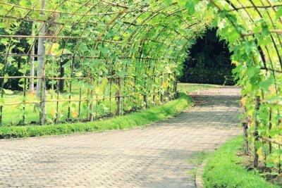Fototapete Baumtunnel von Angled Luffa Pflanze