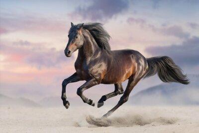 Fototapete Bay horse run gallop in desert sand