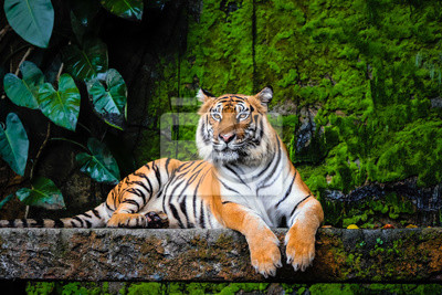 Fototapete beautiful bengal tiger with lush green habitat background