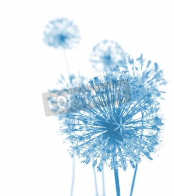 Fototapete Beautiful Blue Flowers / abstract composition on white background