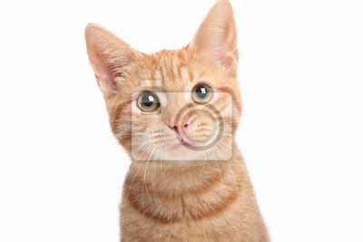 Fototapete Beautiful cute orange cat