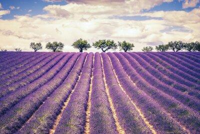 Fototapete Beautiful Lavender field