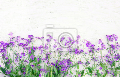 Beautiful Nature Spring Flower Background Fototapete Fototapeten