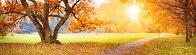 Fototapete Beautiful oak tree in the autumnal park